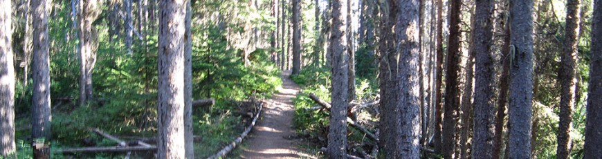 Get ready for some Salmo trails this summer!